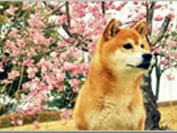 犬専用ホテル宿泊所(わん子の家ワンワン)