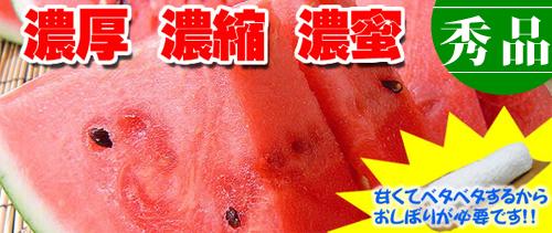 植木西瓜 【伊藤家の美味しいすいか】